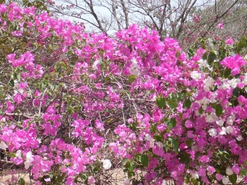 66 Salalah Flora
