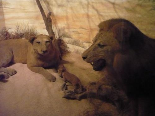 Brijuni-Insel Tierausstellung T3