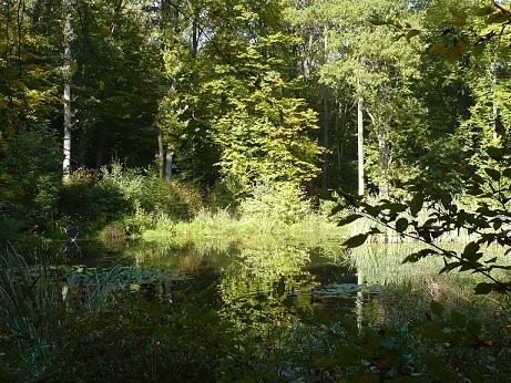 Herbst  Steigerwald