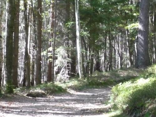 Ilmenau - 07 Weg zur Bertha-Quelle 11