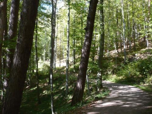 Ilmenau - 07 Weg zur Bertha-Quelle 9