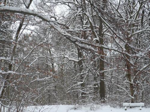 Winter im Erfurter  Steigerwald