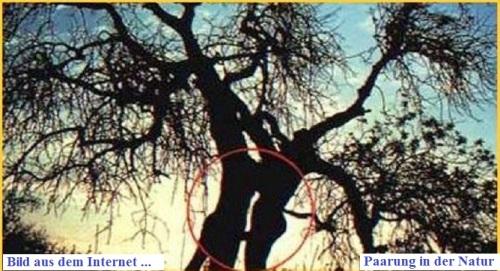 Paarung in der Natur