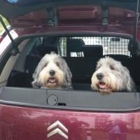 11.07.20 Auch #Hunde wollen ihre #Freude haben ... #
