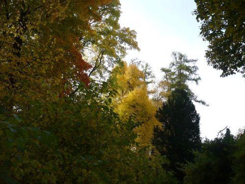 Herbst 2012.10.19 04