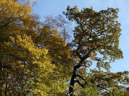 Herbst 2012.10.19 02