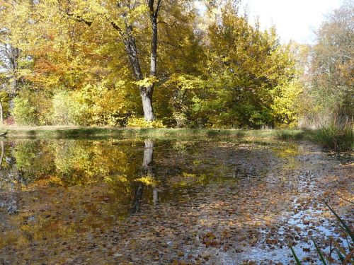 Herbst 2012.10.19 01