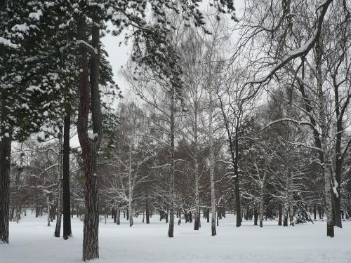 Erfurter SüdPark im Winter