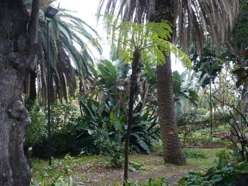 418 6.KSF FUNCHAL auf Madeira _ Impressionen