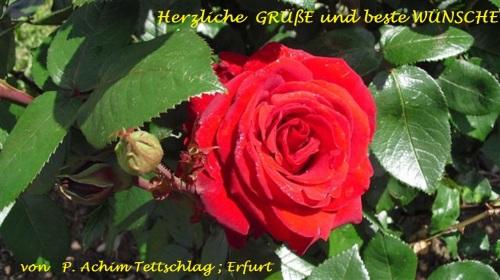 BLUMEN_Rose_Gruß