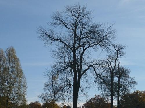 Varianten -0- Goethes Gartenhaus im Herbst
