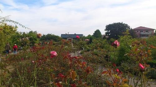 2014.09.24 BdLangensalza 13 RosenGarten