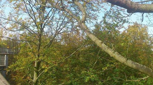 Besuch im Oktober 2014 12 Baumkronenpfad 2