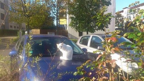 Kontrast Katze kontra Auto