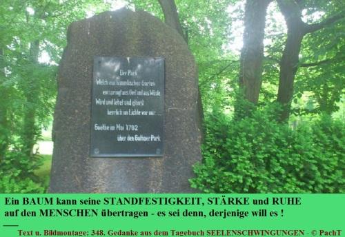 SSW348.Gedanke_Baum u. Mensch