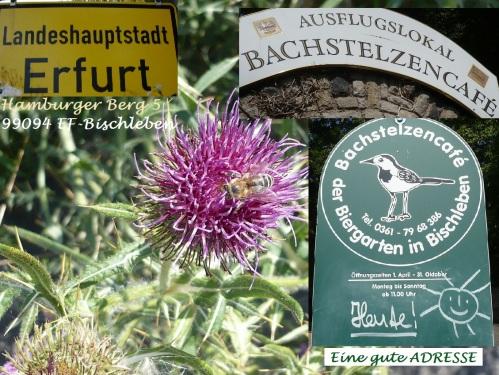 BachstelzenCafe EF-Möbisburg