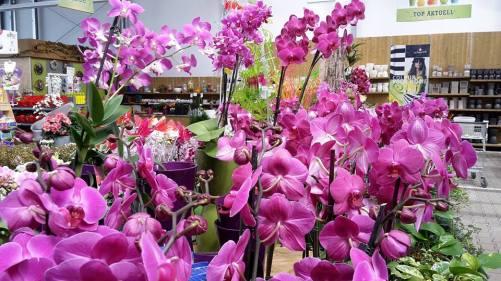 Blumenparadies MORANDA 1