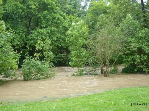 Weimar Ilmpark Hochwasser 01.06.13 4