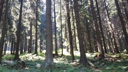 Oberhof 4 Waldspaziergang