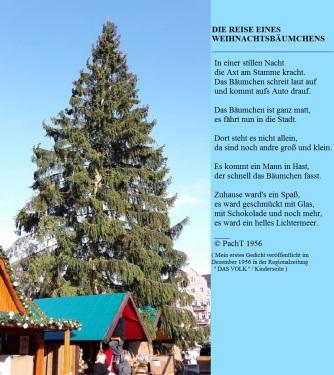 Reise eines Weihnachtsbaumes _ Gedicht