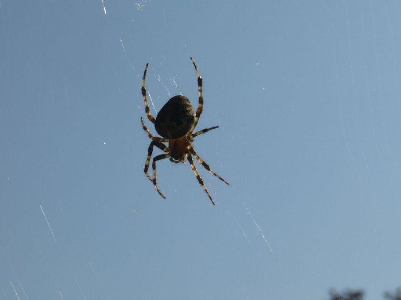 2011.10.03.12 BdLgs JapanischerGarten Spinne