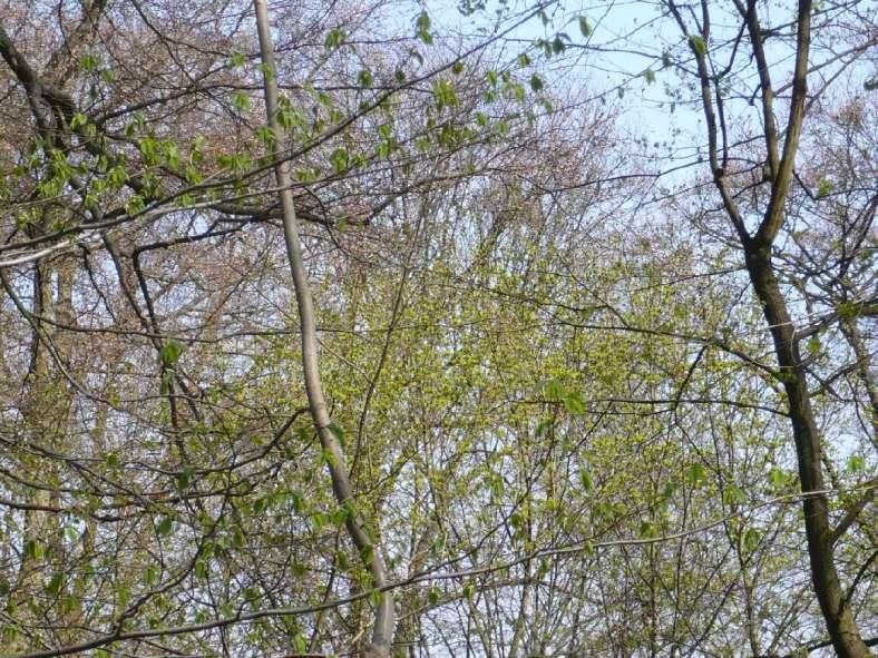Österlicher Frühling 2