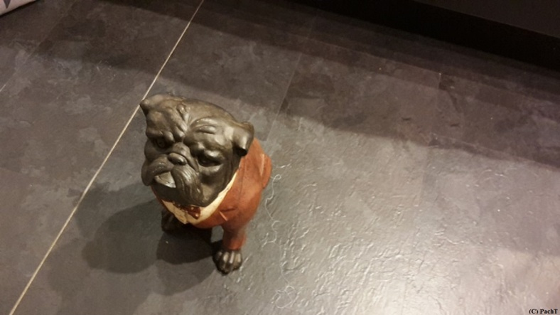 Hund - ein armer Hund