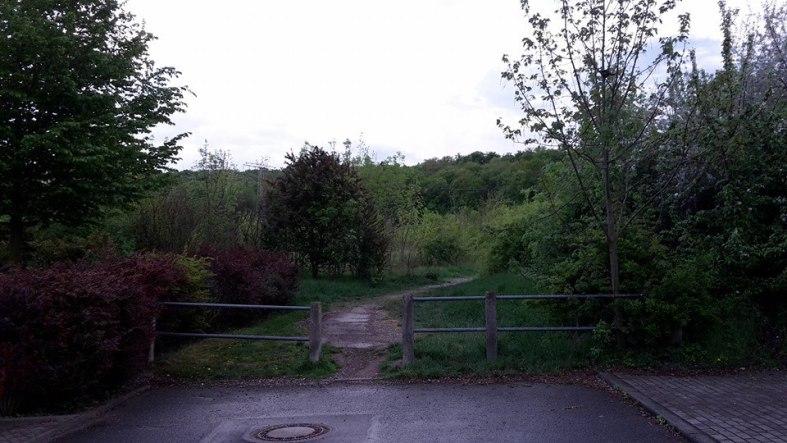 Am Buchberg Mein Weg zum Wald