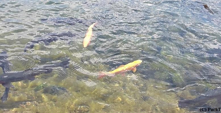 FischWasser