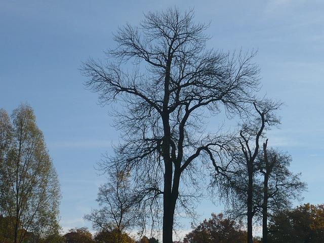 weimar-goethegarthaus-ilmpark-herbst-0-2010