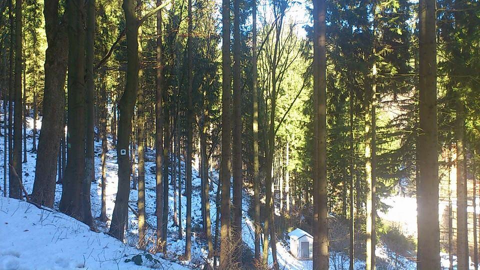 winterwaldwanderung-1-frdroda