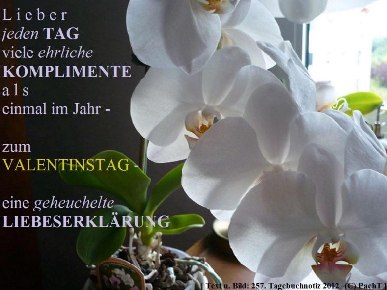 ssw257-gedanke_valentinstag2
