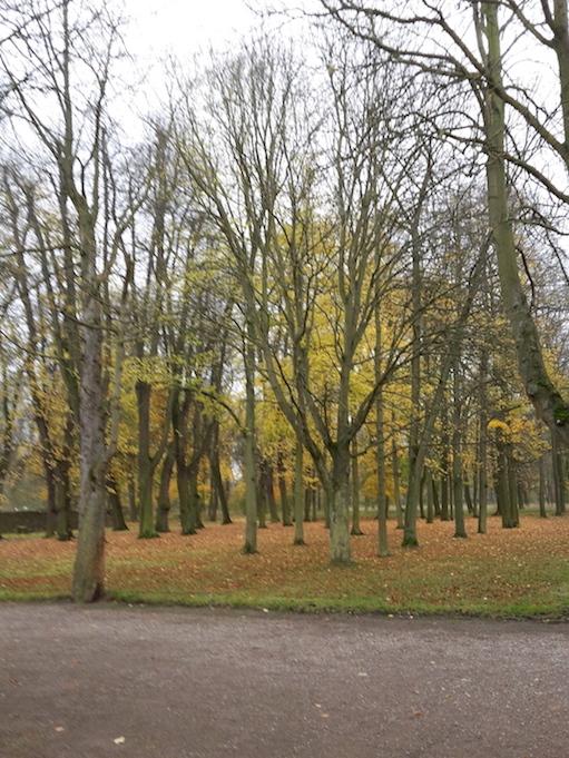 2017.11.07_02 Park und Schloss MOLSDORF Park