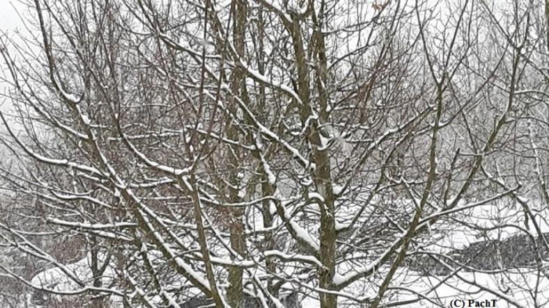 Winter - Blickpunkt