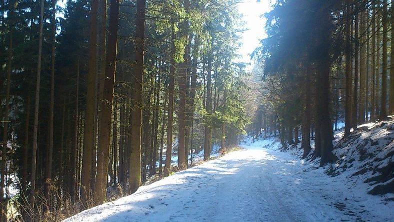 WinterWaldWanderung 2 FrdRoda
