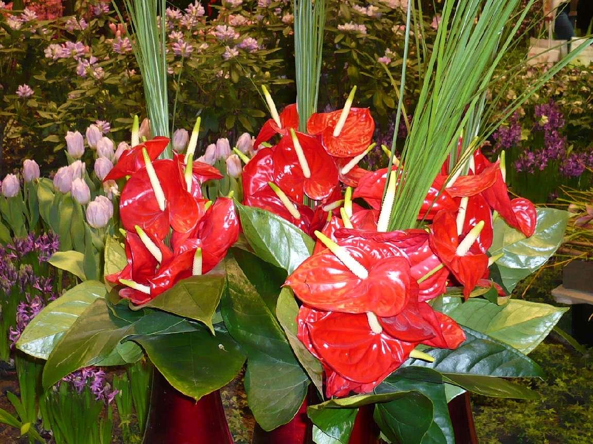 Grüne Woche BlumenPracht6