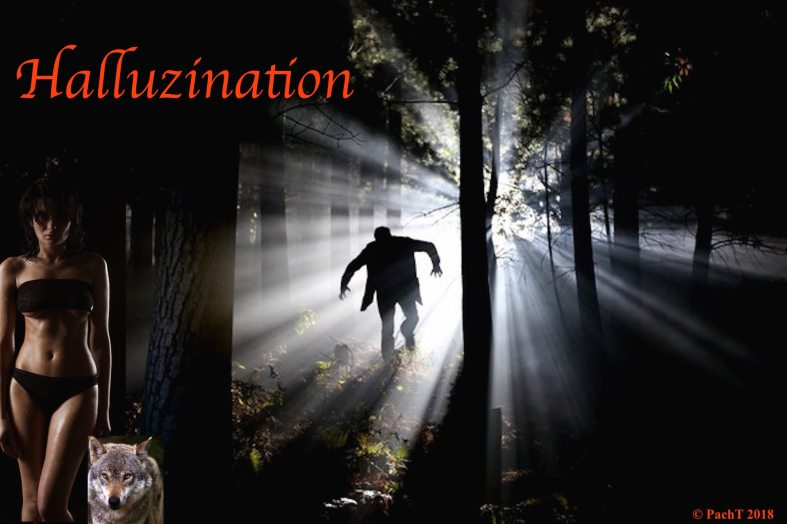 Halluzination Original