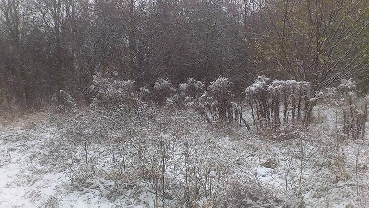 Schnee von gestern 2 _ 03.Dez.2014