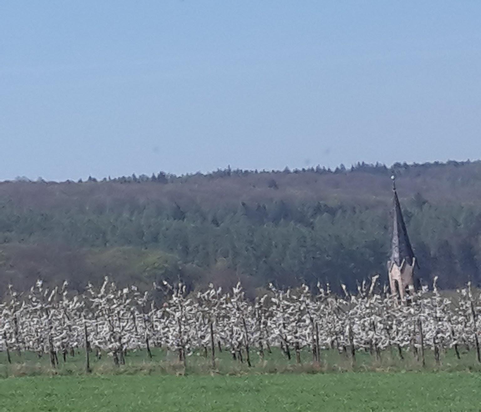 2018.04.19 Gierstädt 1 Kirschblüte