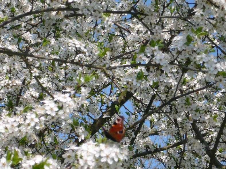 Ostern Lenz 2009
