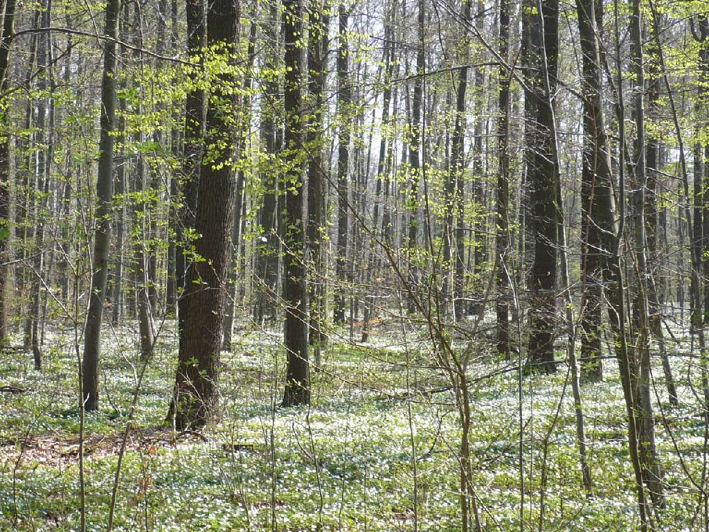 Ostern Lenz i.Wald 09