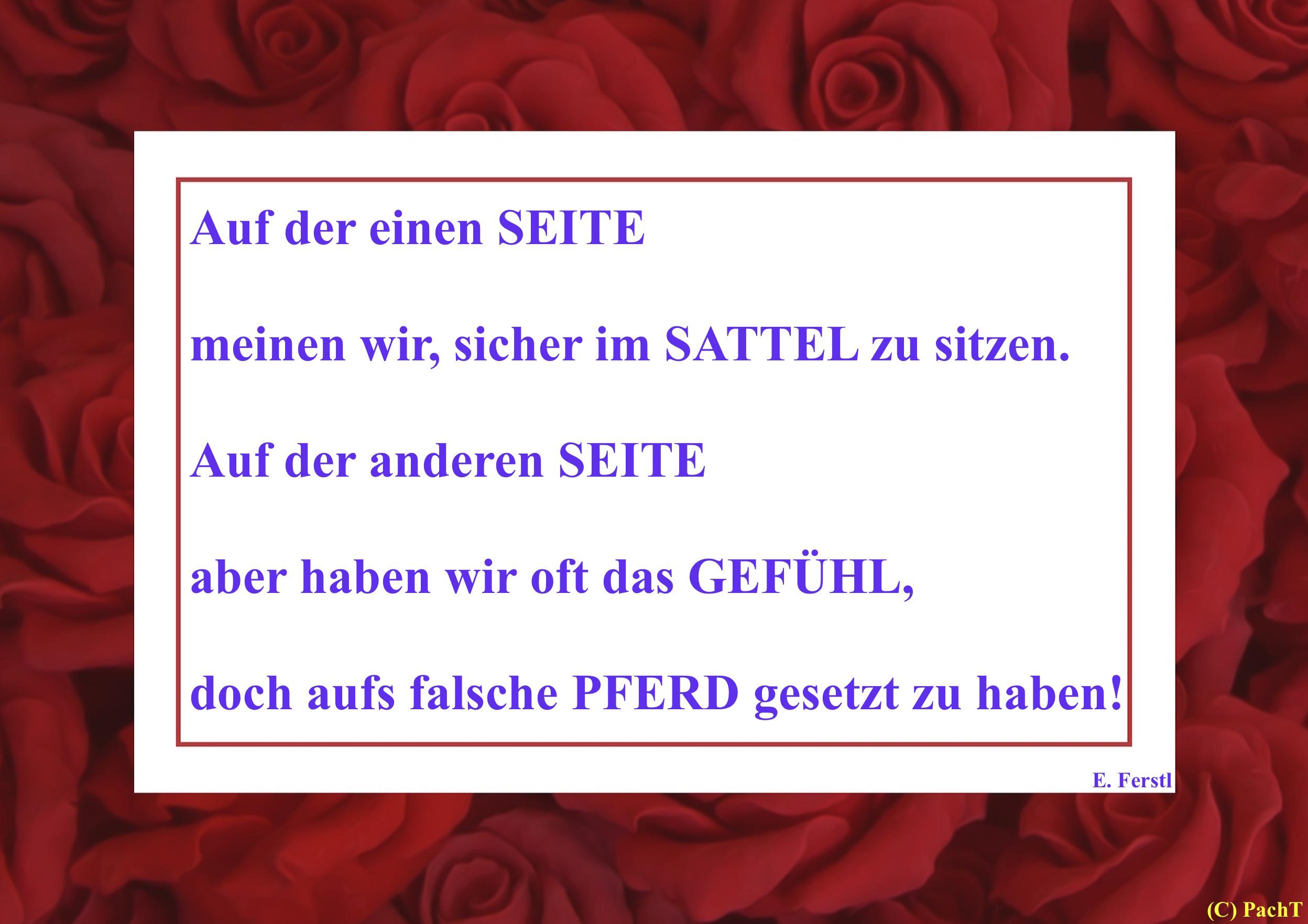 Zitat Sattel