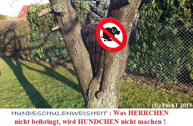 KURIOS 113 HundeSchulenWeisheit