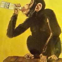11.01.21 Die #Frau und der #Affe #