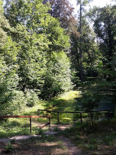 Steigerwald FroschteichImpression3