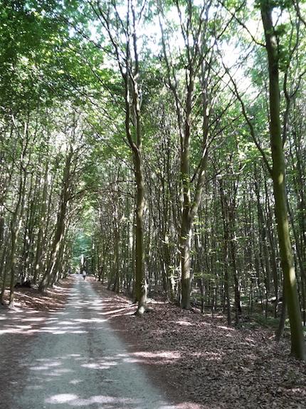 2018.06.09 - 23. URLAUB auf USEDOM 055 Koserow Waldspaziergang