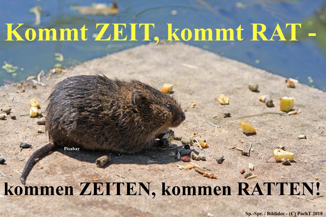 ZitatSpont Rat