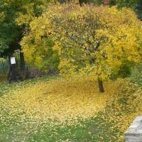 17.09.21 #Gedanken im #Herbst #
