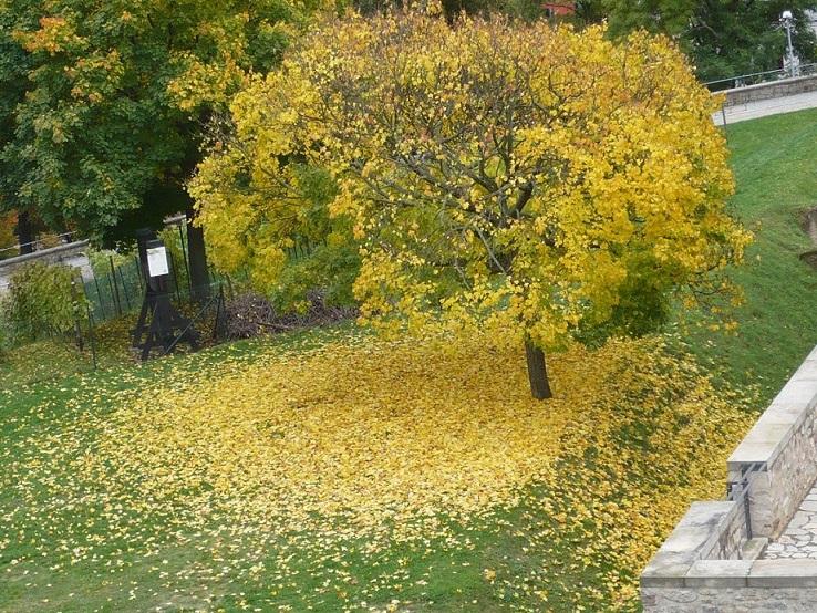 Herbst Blätter um Stamm