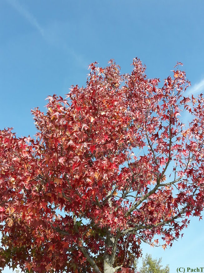 Herbst oben